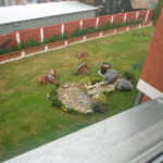 pogled na dvoriste